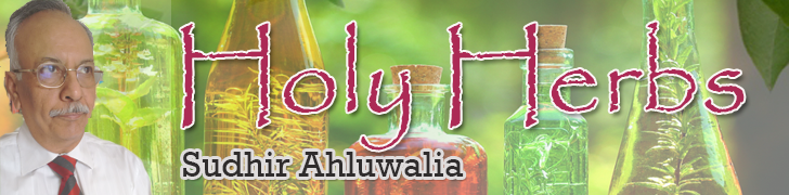 holy-herbs, sudhir-ahluwalia